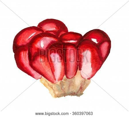 Pomegranate Seed Watercolour Isolated On Whte Background. Exotic Summer Diet. Fresh Vitamin Nutritio