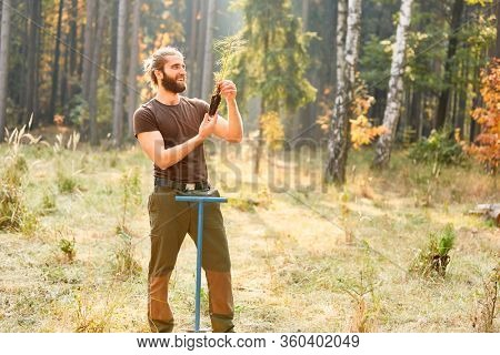 Young forestry or forester plants a pine seedling for forest afforestation