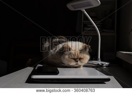 Home Office. A White Desk With A Table Lamp. Adorable Beige Domestic Cat Lit By The Sunlight Is Slee