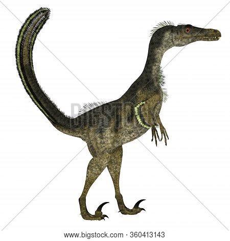 Velociraptor Dinosaur Side Profile 3d Illustration - Velociraptor Was A Carnivorous Theropod Dinosau
