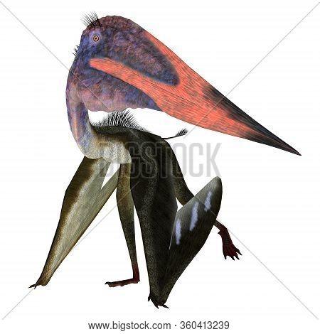 Zhejiangopterus Pterosaur Walking 3d Illustration - Zhejiangopterus Was A Carnivorous Pterosaur Rept