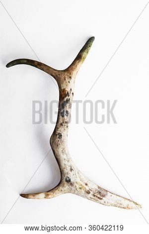 Part Of Deer Antlers On A White Backgroung
