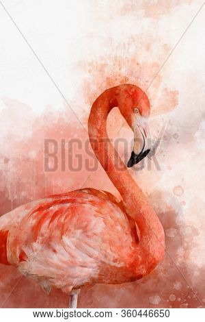 Portrait Of A Flamingo, Watercolor Painting. Red Flamingo (phoenicopterus Ruber), Zoological Illustr