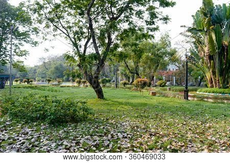 A Tree On Green Color Grass Meadow. Landscape Design Of A Public Park. Spring Season Formal Garden T