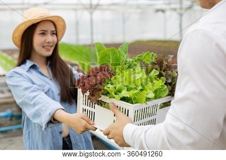 Manufacturers Send Baskets That Contain Only Clean And Quality Organic Vegetables From Hydroponics F