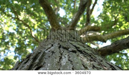 Looking Up A Tree.