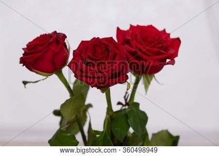 Three Red Roses With Boke Background. Copy Space - Valentines And 8 March Mother Womens Day Concept.