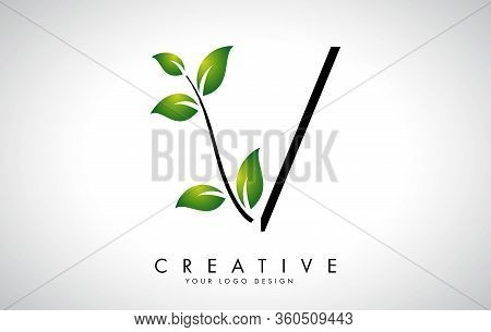 Leaf Letter V Logo Design With Green Leaves On A Branch. Letter V With Nature Concept. Eco And Organ
