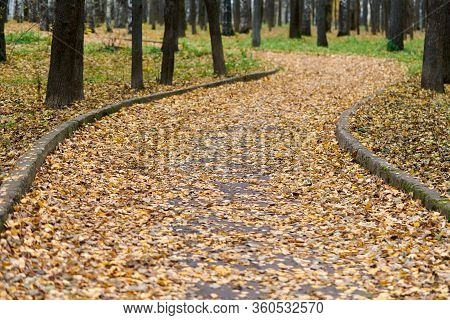 Beautiful Forest Footpath With Fallen Leaves. Autumn Birch Alley. Calm Weather. No People. Season Ch
