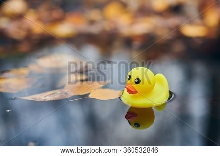 Autumn Duck Toy In Puddle With Leaves. Autumn Symbol Of Change Of Seasons. Duck Tales In City Park.