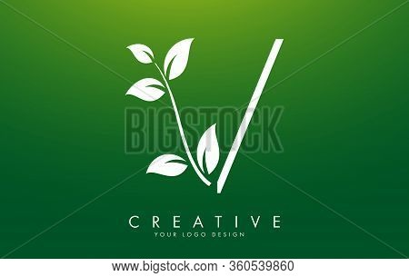 White Leaf Letter V Logo Design With Leaves On A Branch And Green Background. Letter V With Nature C