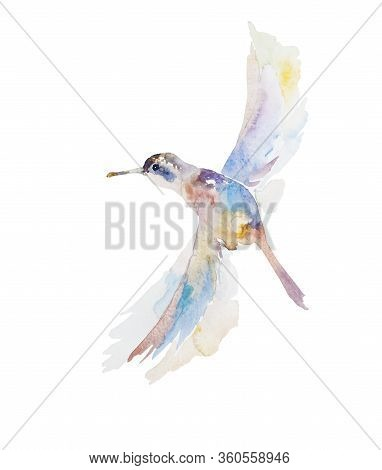 Abstract Watercolor Painting Of Pink, Blue And Yellow Small Flying Humming Bird Isolated On White Ba