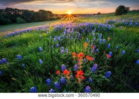 Glorious Sunset In Ennis Texas Over A Wildflower Field Filled With Bluebonnets