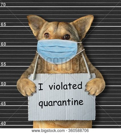 The Beige Dog In A Surgical Protection Face Mask Was Arrested. It Has A Sign Around Its Neck That Sa