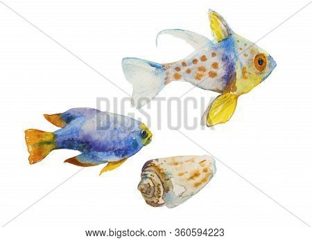 Set Of Watercolor Tropic Fish And A Shell Isolated On White Background. Yellowtail Damsel Fish And G