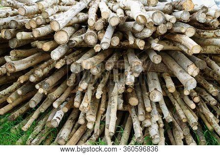 Dry Brushwood Firewood For Kindling The Stove.