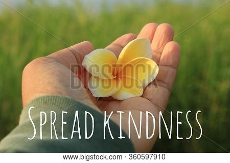 Inspirational Quote - Spread Kindness. With Woman Hand Holding Yellow Bali Frangipani Flower In Hand