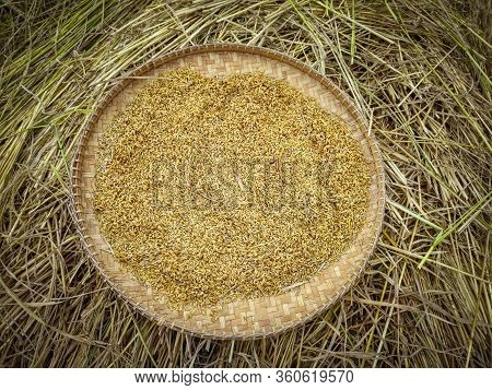 Image Of Isolated Harvested Rice Paddy Grain On Round Bamboo Storage