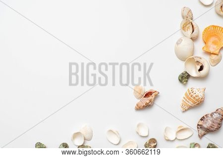 Different Seashells On A White Background , The Concept Of Holidays By The Sea. Background With Shel