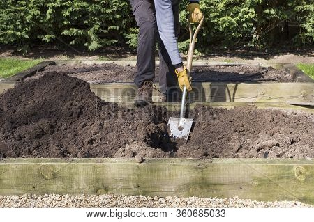 Man, Male Gardener Digging A Hole With A Shovel In A Vegetable Garden, Uk