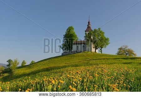 Charming Little Church Of Sveti Tomaz (saint Thomas) On A Hill With Blooming Dandelions. Sunny Sprin