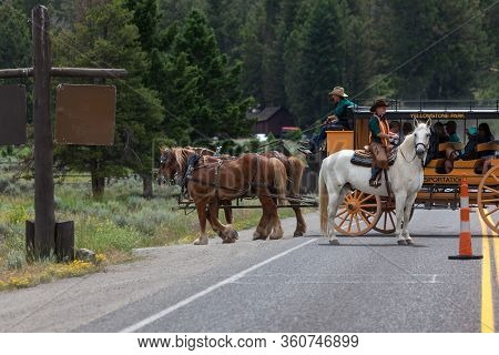 Yellowstone National Park, Usa - July 14 2014:  An Employee On A White Horse Stops Traffic So A Yell