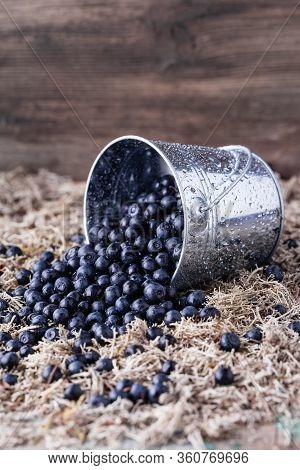 Blueberry In A Bucket On Moss Background