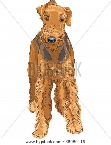 Vector Sketch Dog Airedale Terrier Breed