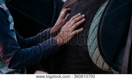 Working Hands Of An Elderly Person On Body Of Black Horse. Closeup Of Woman Stroking Her Steed With