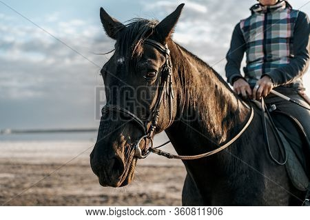 Rider Trainer On Walk With Horse Stallion In Nature By River. Woman Gallops. Awesome Autumn Scene. C
