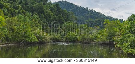 Pristine Vibrant Jungle Scene With Many Water Buffalo In Wild River Seen In West Sumatra, Indonesia