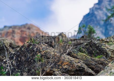 Beautiful Small Bird On Rock Among Rich Vegetation In Mountains. Colorful Scenery With Little Birdie