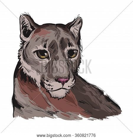 Cougar Large Felid Native To Americas Isoated Wildlife Cat. Digita Art Illustration Of Mountain Lion