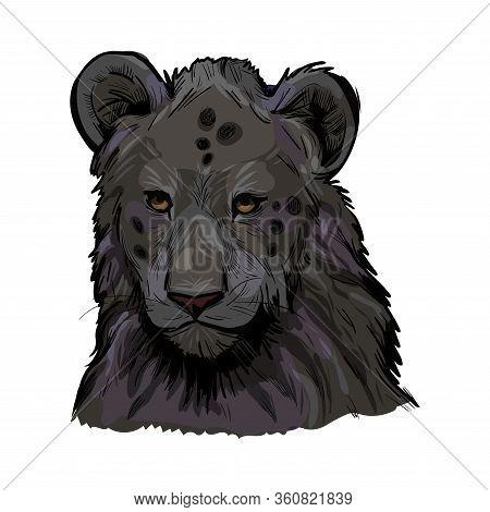Panthera Leo Muzzle Portrait In Closeup. Mammal With Black Furry Coat, Feline Animal. Predator From