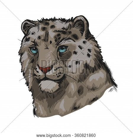 Snow Leopard Portrait In Close Up. Watercolor Vector Illustration Of Panthera Uncia. Mammal With Thi