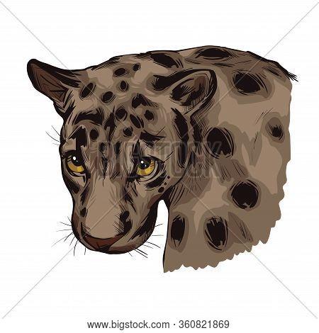 Sunda Clouded Leopard Muzzle Portrait Closeup. Neofelis Diardi Animal From Feline Mammals Family. Me