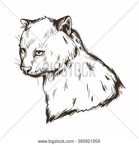 Herpailurus Yagouaroundi Portrait Of Animal. Watercolor Drawing Of Puma. Eyra Profile, Mammal From F