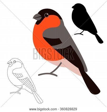 Bird Bullfinch , Vector Illustration, Flat Style,  Black Silhouette,set