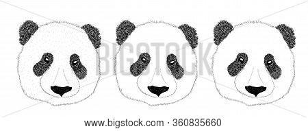 Panda Animal Cute Face, Set. Asian Panda Bear Head Portrait. Realistic Fur Portrait Funny Black And