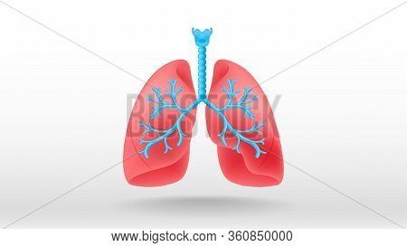 Lungs Internal Organ Health Care Concept Vector Illustration White Background