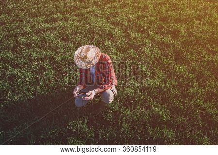Wheat Farmer Using Drone Remote Controller In Wheatgrass Field. Aerial View Of Male Farm Worker Obse