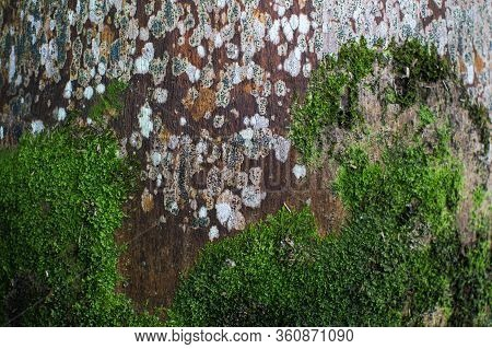 Moss Grows On An Old Palm Tree Background.