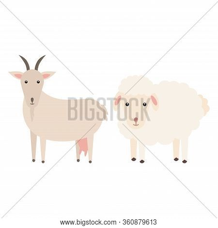 Comparing A Goat With A Sheep Vector Flat Illustration Isolated On White Background. Domestic Animal