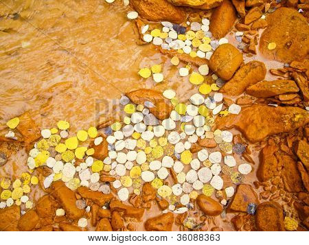 Yellow Aspen Leaves Float In Muddy River