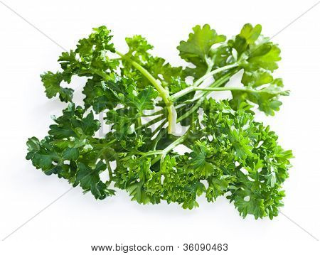 Parsley Bush Isolated On White Background