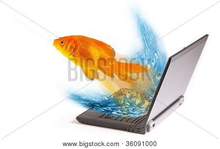 Goldfish Jumping,