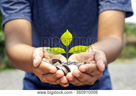 Planting A Small Tree With Women's Hands, The Idea Of Money And Investment Growth.