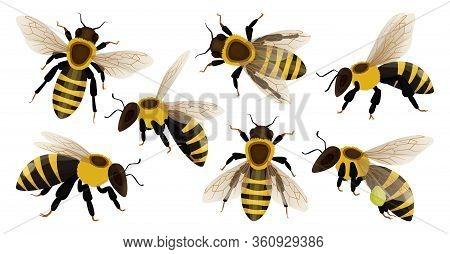 Honey Bee Isolated Cartoon Set Icon. Vector Illustration Animal Of Honeybee On White Background. Vec