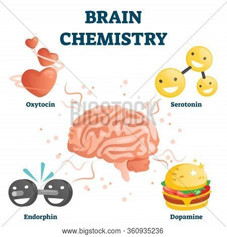 Brain Chemistry Vector Illustration. Labeled Educational Happiness Chemicals Collection. Oxytocin, S