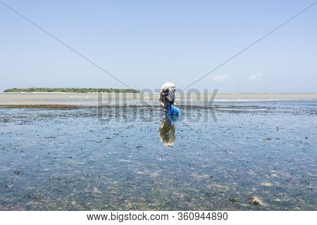 The Man Catch A Ophiura Albida In Sea